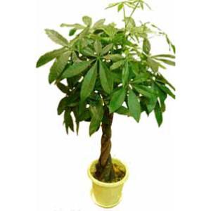 植物招財法